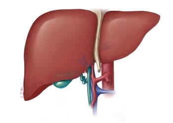 هل السكر يؤثر على الكبد؟