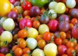فوائد صحية كبيرة لألوان الطماطم المختلفة
