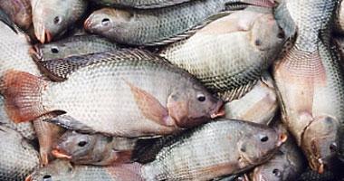 استشارى سمنة: البيض واللبن والسمك لتنمية ذكاء الطفل