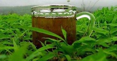 استشارى سمنة: الشاى الأخضر والزبادى والشوفان لتقوية الجهاز المناعى