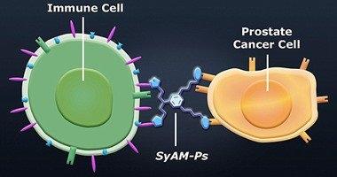 اكتشاف أجسام مضادة صناعية تؤخد عن طريق الفم لعلاج السرطان والإيدز