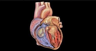 8 خطوات للوقاية من أمراض القلب القاتلة
