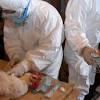 بؤرة ثالثة لإنفلونزا الطيور بالوادى الجديد واحتجاز ١٥ شخصا للاشتباه فى إصابتهم بالمنوفية