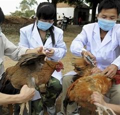 اليوم.. اجتماع لـ«العليا لمكافحة مرض إنفلونزا الطيور» برئاسة «محلب»